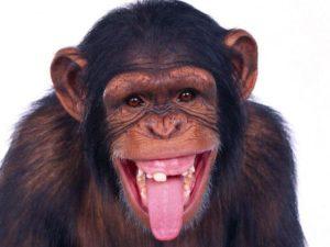 Mój ortodonta jest beznadziejny